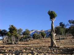 Maroc_057.JPG