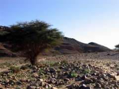 Maroc_133.JPG